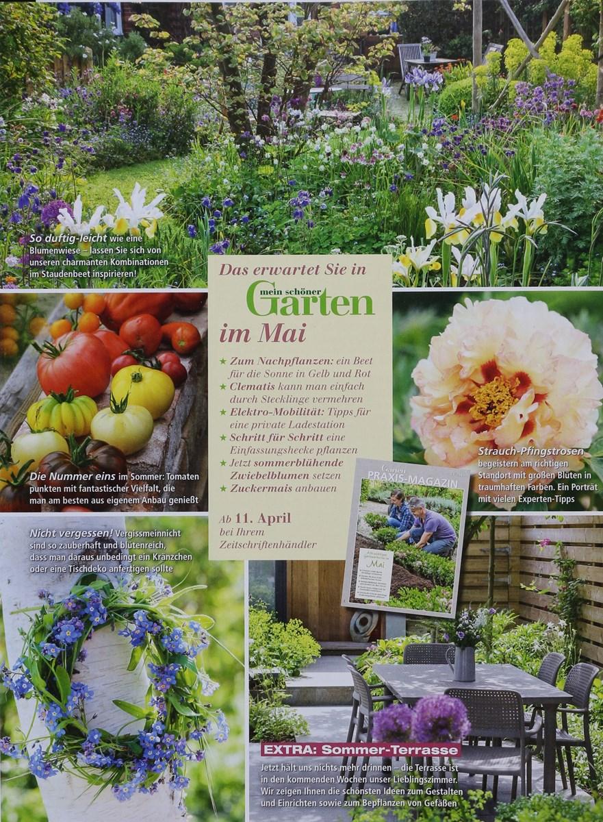Mein Schöner Garten 42019 Zeitungen Und Zeitschriften Online